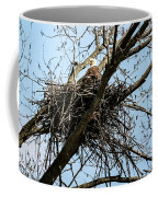 Bald Eagle In The Nest Coffee Mug