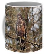 Bald Eagle Juvenile 2 Coffee Mug