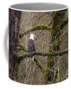 Bald Eagle On Mossy Branch Coffee Mug by Sharon Talson