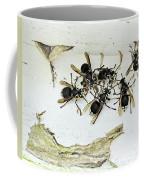Bald Faced Hornets Coffee Mug