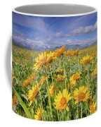 Balsam On The Rocky Mountain Front Coffee Mug