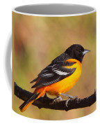 Baltimore Oriole IIi Coffee Mug