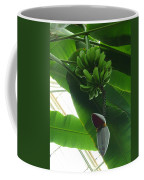 Banana Plant Kew London England Coffee Mug