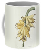 Bananas Coffee Mug by Pierre Joseph Redoute