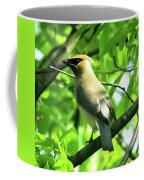 Bandit Bird Coffee Mug