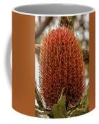 Banksia Serrata 2 Coffee Mug