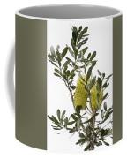 Banksia Syd02 Coffee Mug