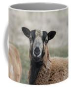 Barbados Blackbelly Sheep Portrait Coffee Mug