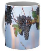 Barbera Grapes Ready For Harvest South Coffee Mug