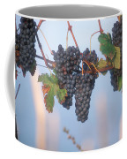 Barbera Grapes Ready For Harvest South Coffee Mug