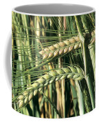 Barley, Green Stage Coffee Mug