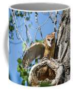 Barn Owl Owlet Stretches Coffee Mug
