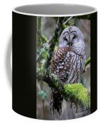 Barred Owl In Tree Coffee Mug
