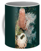 Barrell Sponges And Sea Fans Coffee Mug