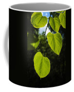 Basswood Leaves Against Dark Forest Background Coffee Mug