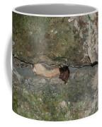 Bats Inside The Pyramid At Grupo Nohoch Mul At The Coba Ruins  Coffee Mug