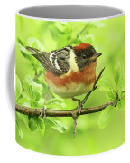 Bay-breasted Warbler Coffee Mug