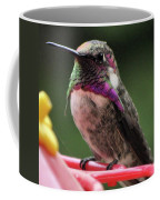 Beautiful Anna's Hummingbird On Perch Coffee Mug