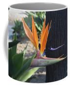 Beautiful Bird Of Paradise Flower In Full Bloom  Coffee Mug