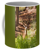 Beautiful Buck Deer In The Pike National Forest Coffee Mug