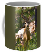 Beautiful Buck In The Pike National Forest Coffee Mug