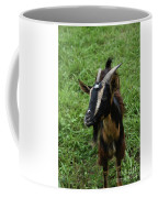 Beautiful Face Of A Billy Goat With Tan And Black Silky Fur Coffee Mug