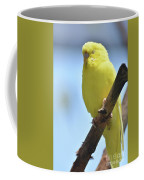 Beautiful Face Of A Yellow Budgie Bird Coffee Mug