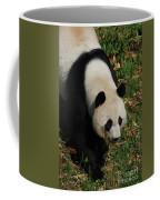 Beautiful Giant Panda Bear Walking Through A Field Coffee Mug