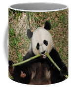 Beautiful Giant Panda Eating Bamboo From The Center Coffee Mug