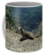 Beautiful Ground Squirrel Standing At The Edge Of The Coast Coffee Mug