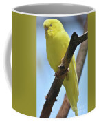 Beautiful Little Yellow Budgie Bird In Nature Coffee Mug