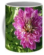 Beautiful Pink And White Dahlia Coffee Mug
