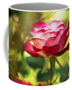 Beautiful Pink Rose Blooming In Garden Coffee Mug