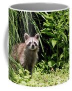 Beautiful Racoon Coffee Mug