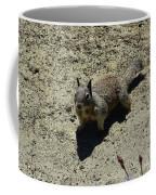 Beautiful Squirrel Standing In A Sandy Area In California Coffee Mug