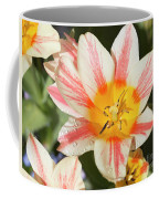 Beautiful Tulip With A Yellow Center And Pink Striped Petals Coffee Mug