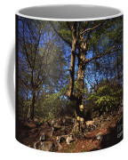 Beech Trees Coming Into Leaf  In Spring Padley Wood Padley Gorge Grindleford Derbyshire England Coffee Mug