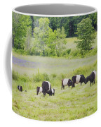 Belted Galloway Cows Rockport Maine Poster Prints Coffee Mug