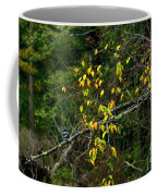 Belted Kingfisher Along Williams River  Coffee Mug by Thomas R Fletcher