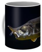 Beluga Sturgeon No 1 Coffee Mug