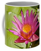 Beyond Beautiful Water Lily 3 Coffee Mug