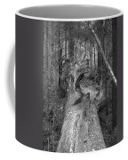 Big Basin 2 Coffee Mug
