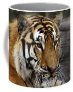 Big Cats 78 Coffee Mug
