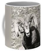 Big Horn Ram Bandw 5 Coffee Mug