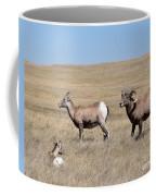 Big Horn Sheep Family Coffee Mug