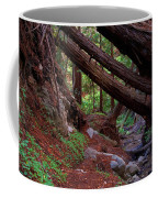 Big Sur Redwood Canyon Coffee Mug