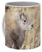 Bighorn Lamb Coffee Mug