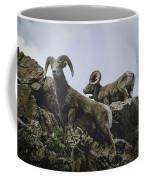 Bighorn Pair Coffee Mug by Jason Coward