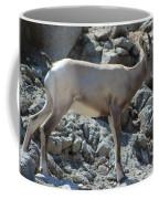 Bighorn Sheep Lamb Coffee Mug