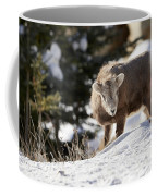 Bighorned Yearling - King Of The Hill Coffee Mug